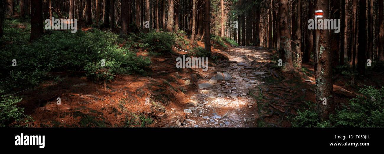 Sentier de randonnée pédestre marque signe peint sur un arbre. Chemin menant à travers la belle forêt de Bohême, parc national. Bannière concept trekking. Banque D'Images