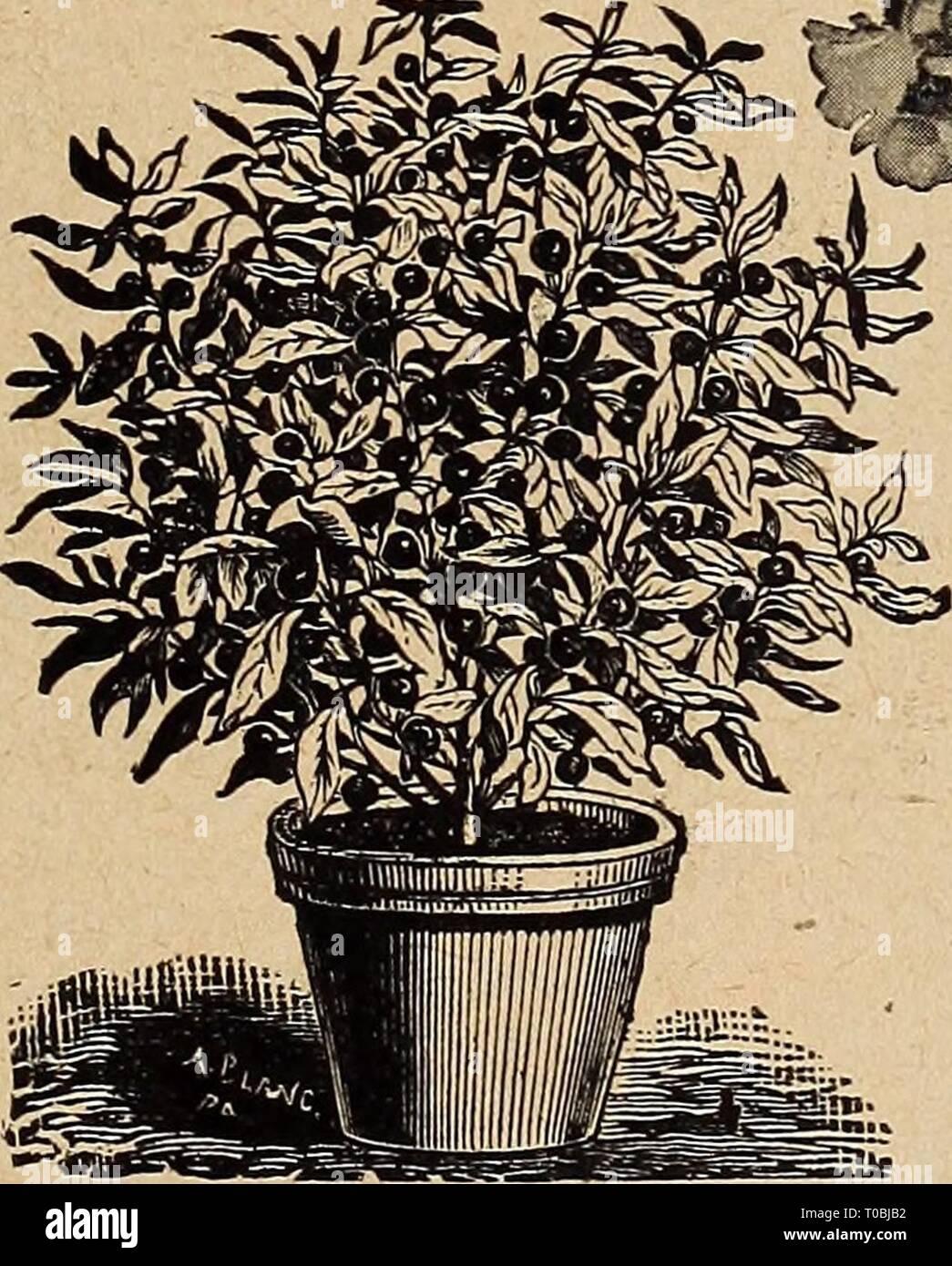 Pot Jardin Grande Taille dreer's garden book 1920 (1920) le jardin de dreer 1920