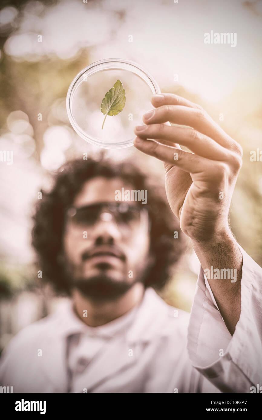 Male scientist inspecting leaf sur boîte de pétri à émissions de Banque D'Images