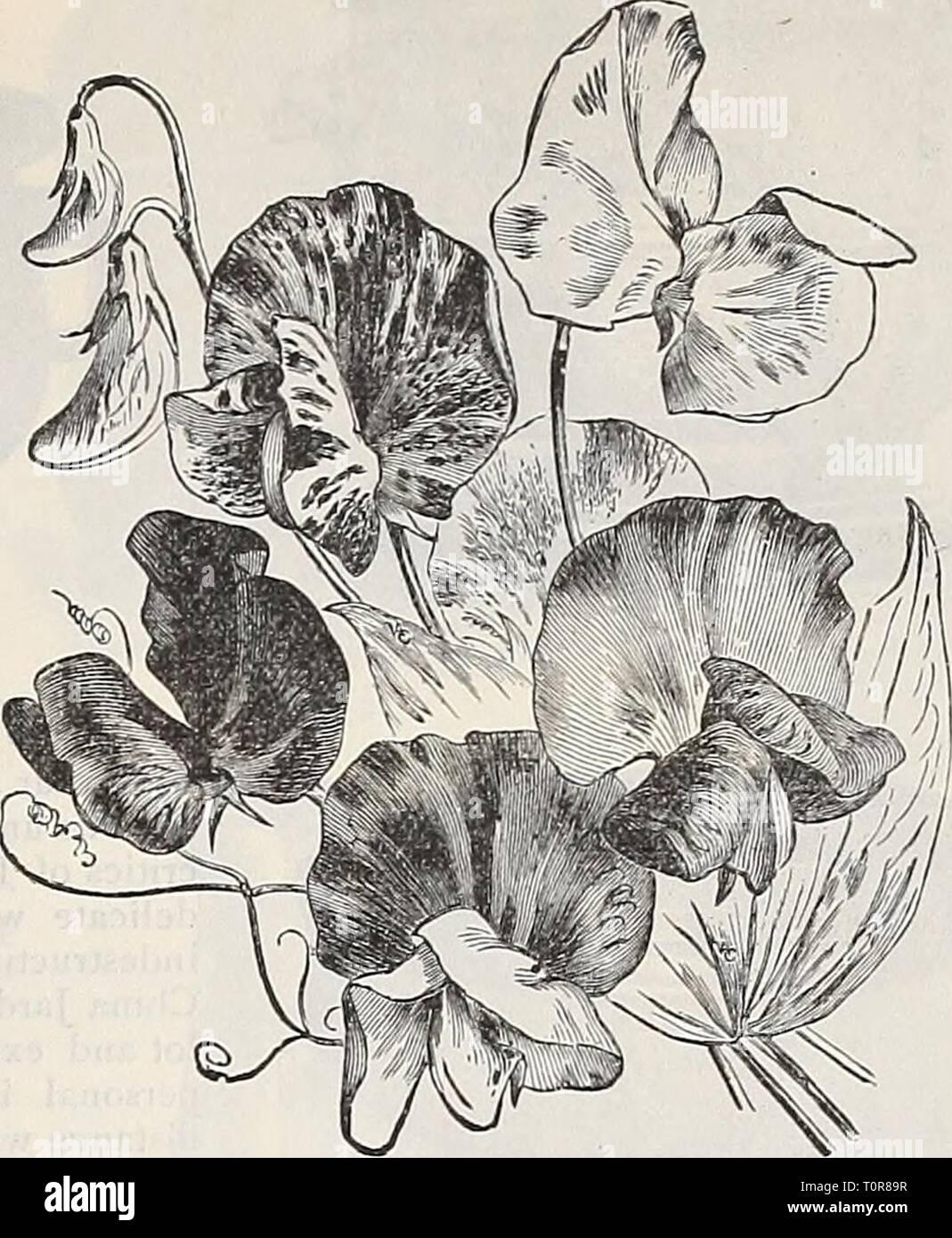 GRAINES DE FLEURS CAPUCINE TOM POUCE Literie Jardin Paquet illustré Mix UK