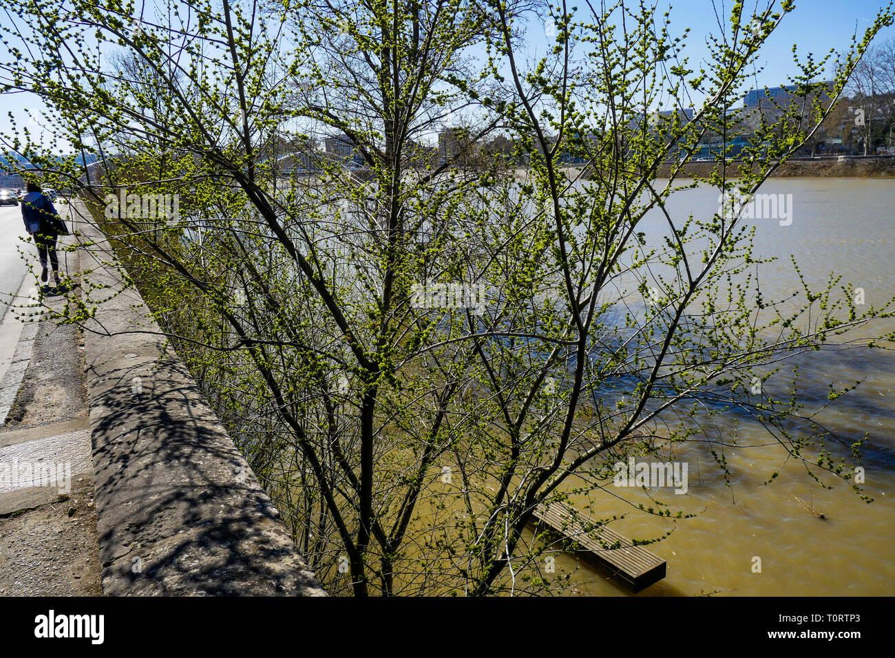 L'inondation de la rivière Saône, Lyon, France Photo Stock