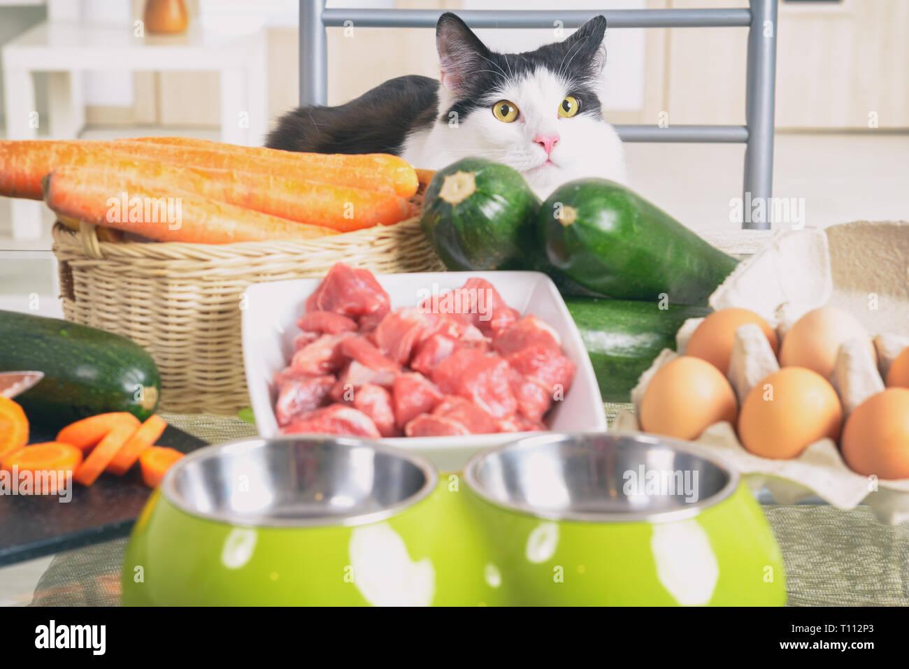 La préparation des aliments naturels et biologiques naturels pour animaux domestiques à la maison Photo Stock