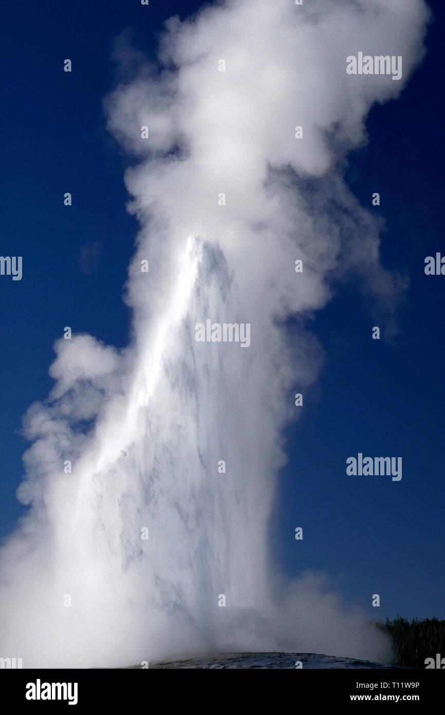 Des nuages de vapeur et d'un flux d'eau bouillante en éruption de Old Faithful, le plus célèbre de plus de 500 geysers actifs trouvés dans le Parc National de Yellowstone, à cheval sur les états du Wyoming, du Montana et de l'Idaho aux États-Unis. Le temps entre les éruptions de l'Old Faithful varie de 60 à 110 minutes, et son bec verseur la hauteur peut varier de 106 à 184 pieds (32 et 56 mètres). Normalement les éruptions durent entre 1,5 à 5 minutes. Les geysers sont parmi les merveilles du parc 10 000 que: hydrothermales multicolores, des sources chaudes et les fumerolles boue (évents). Banque D'Images