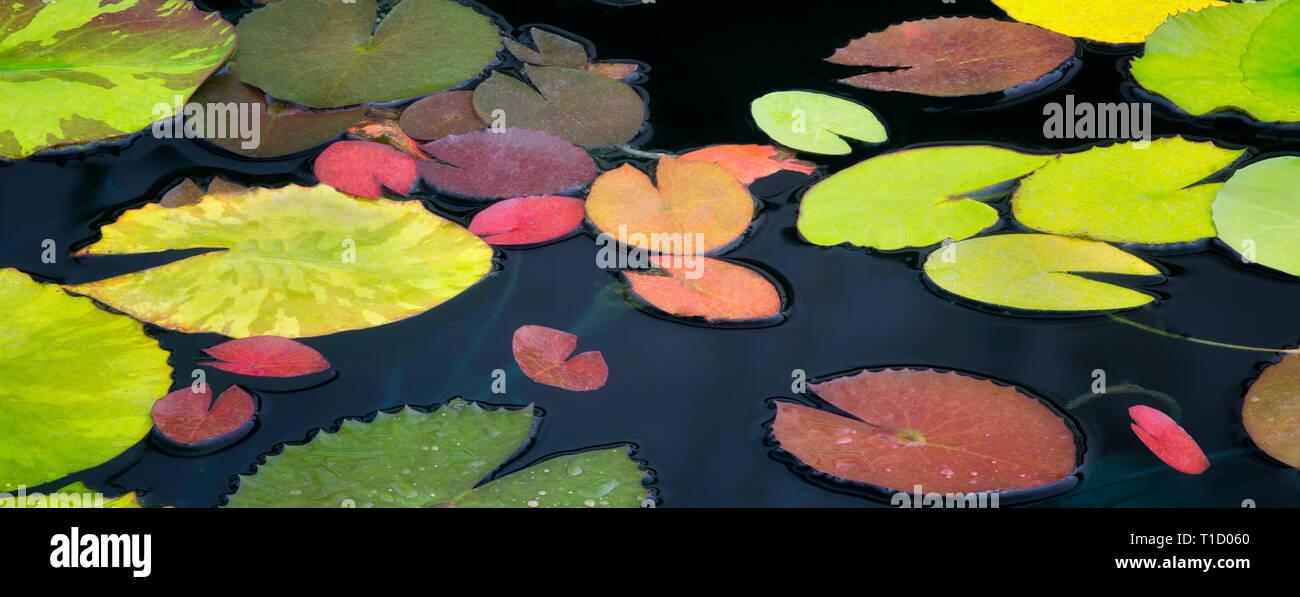 Configuration des feuilles de nénuphar. Oregon Photo Stock