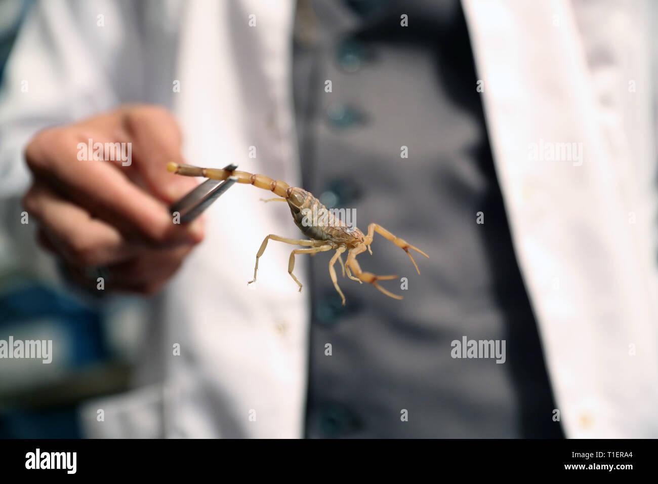 Scorpion datant d'un autre Scorpion rencontres à Ramstein Allemagne