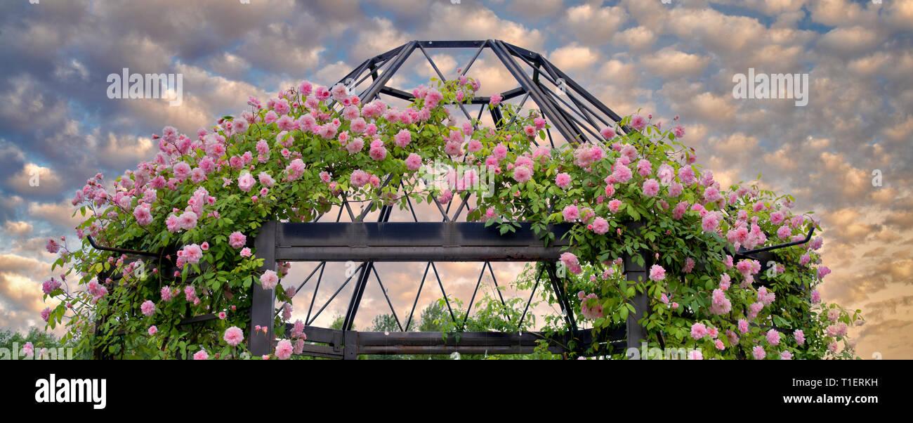 Rose arbor. Jardin de l'Oregon. Oregon Photo Stock