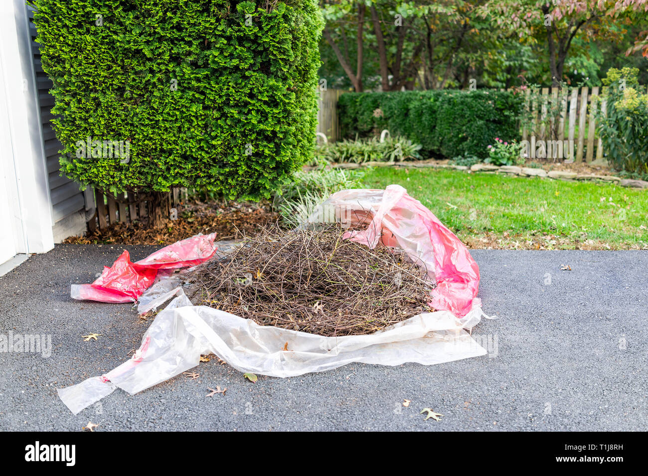Tarp Tree Photos & Tarp Tree Images - Alamy