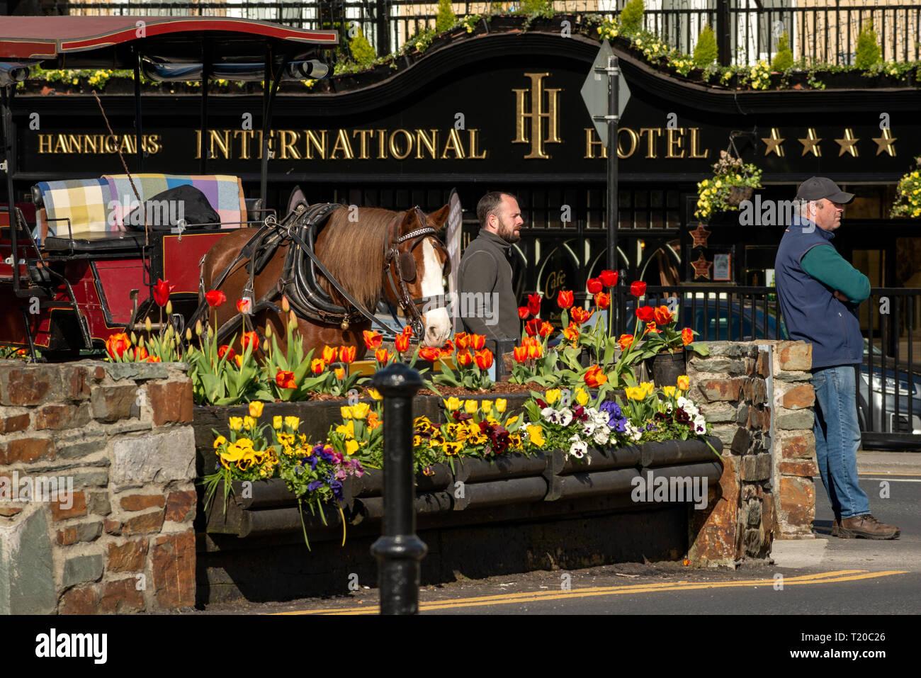 Jarveys attendent les clients à l'hôtel International dans le centre-ville de Killarney sur matin ensoleillé lumineux. Vue d'habitude tous les jours dans le comté de Kerry Killarney Photo Stock
