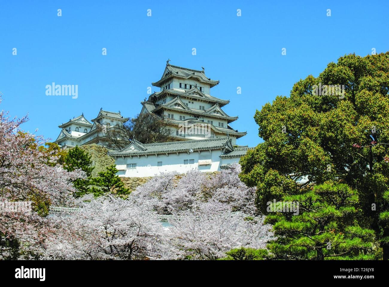 Hauteur Cerisier Du Japon château de himeji, japon, à la hauteur de la saison des