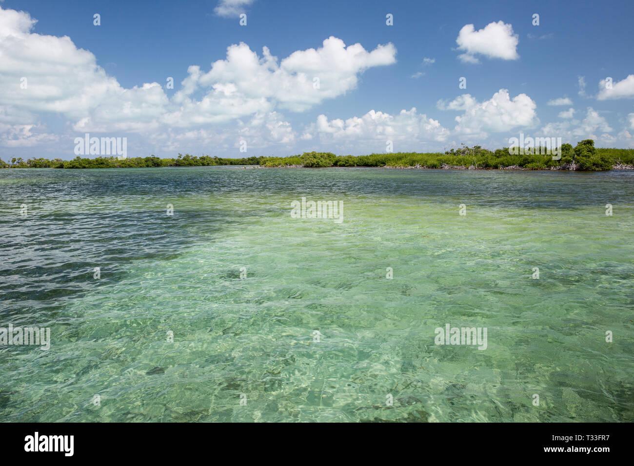 Lagon de banques, Chinchorro Banco Chinchorro, mer des Caraïbes, Mexique Banque D'Images