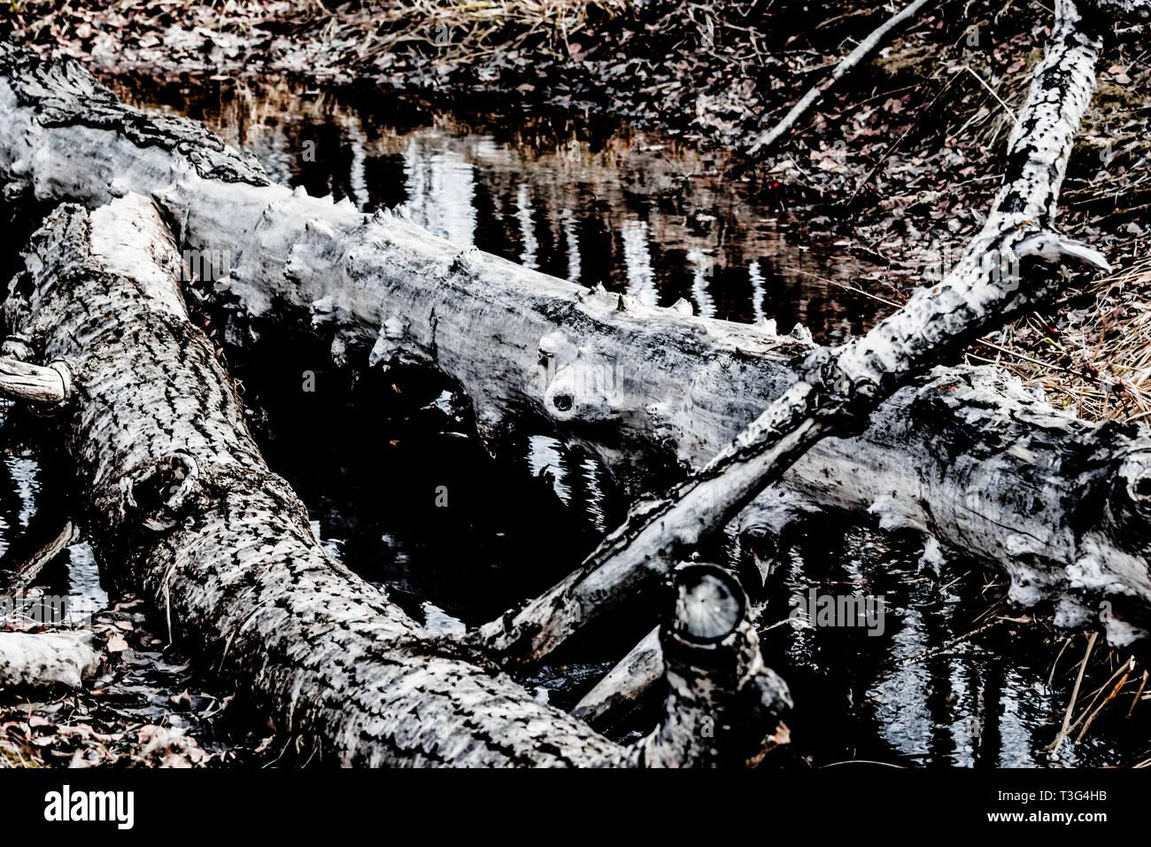 L'âme d'un arbre n'est pas perdu une fois qu'il tombe; elle devient la forme d'art nature Photo Stock