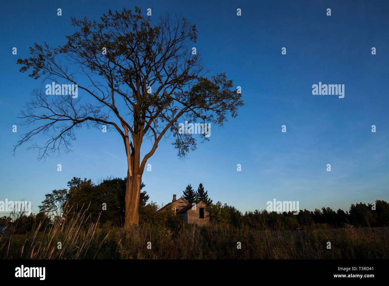 Abandonnez la maison et un arbre dans la campagne USA Photo Stock