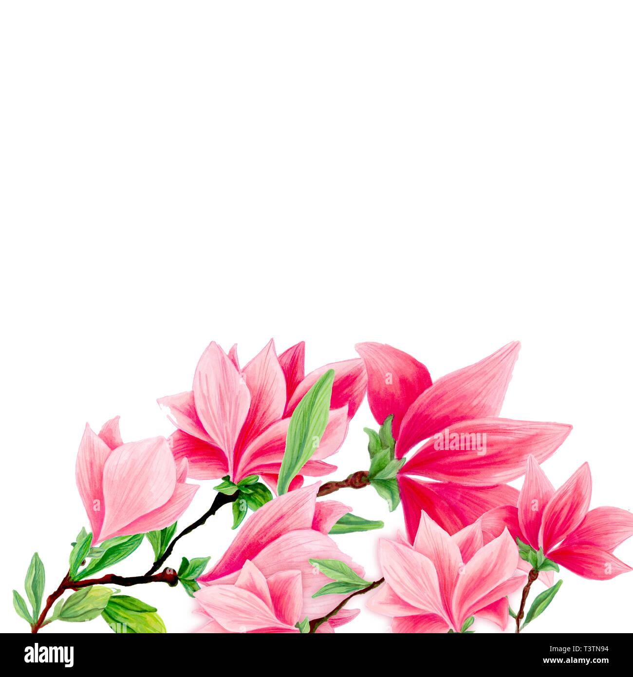 Magnolia hand drawn illustration. Maison de vacances de printemps de ...