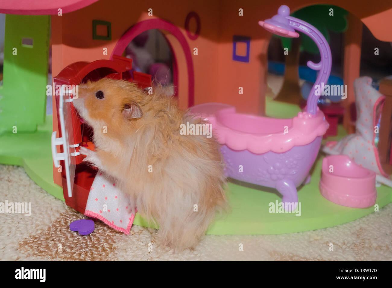 hamster poilu le meilleur porno noir jamais