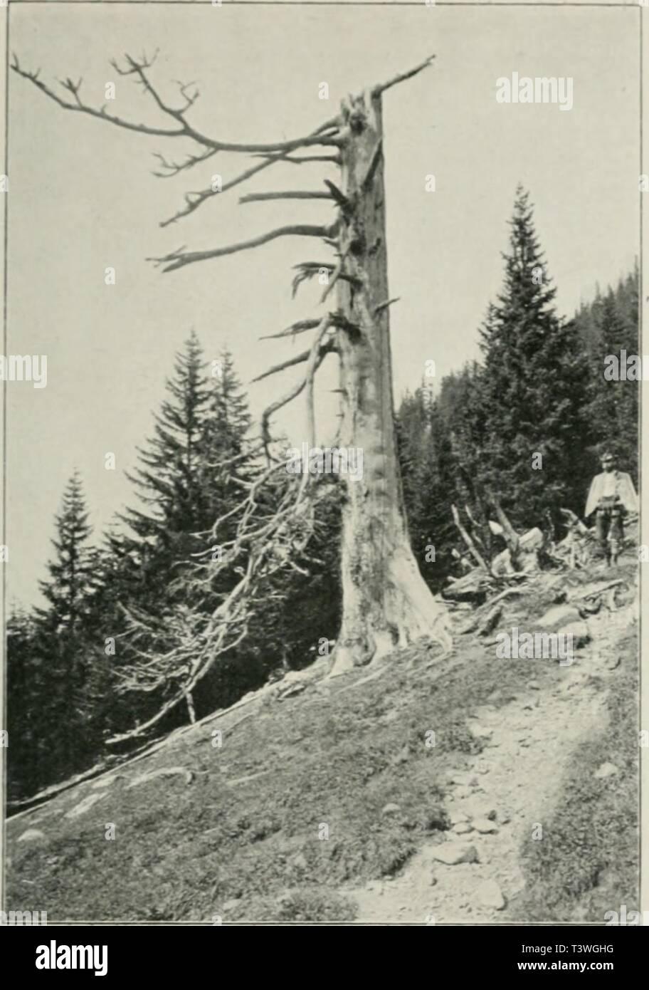 Les bois utilisés sont le chêne, le noyer, lébène, le poirier et le sapin.
