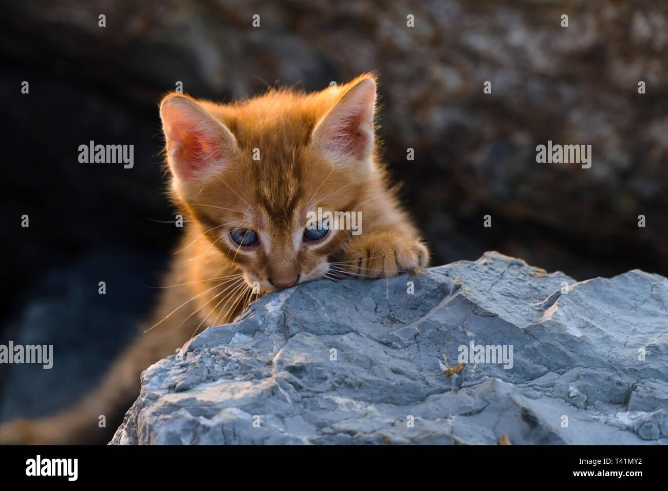 Adorable chaton jaune est assis sur les rochers Banque D'Images