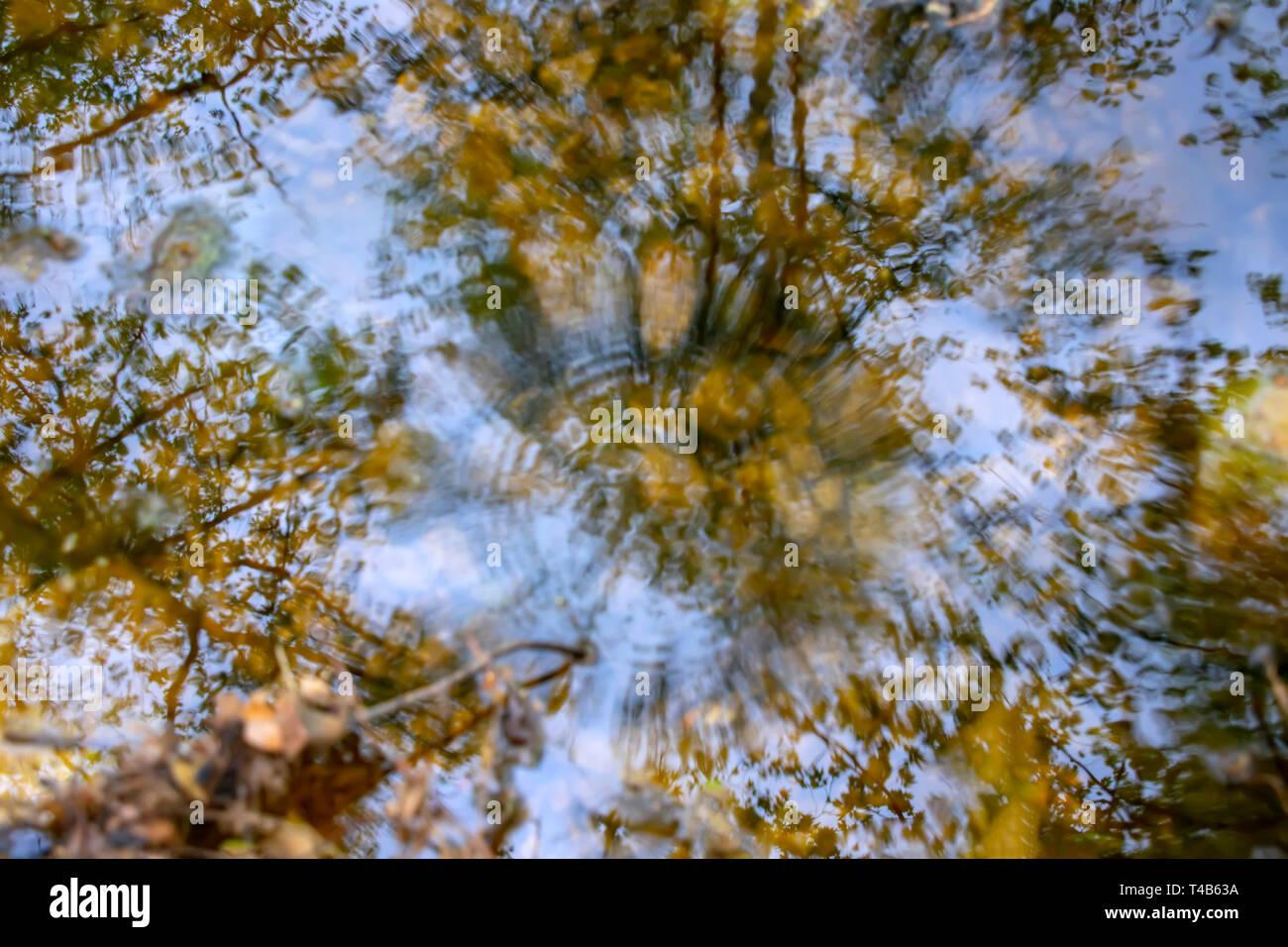 Reflet des arbres dans l'eau d'un ruisseau avec cercles sphériques de tomber la pluie. Paysage Photo Stock