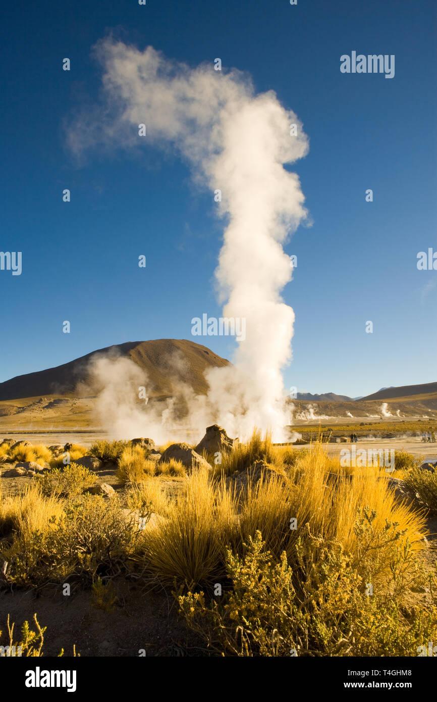 Les fumerolles à El Tatio Geysers à une altitude de 4300m, désert d'Atacama, région d'Antofagasta, Chili, Amérique du Sud Photo Stock