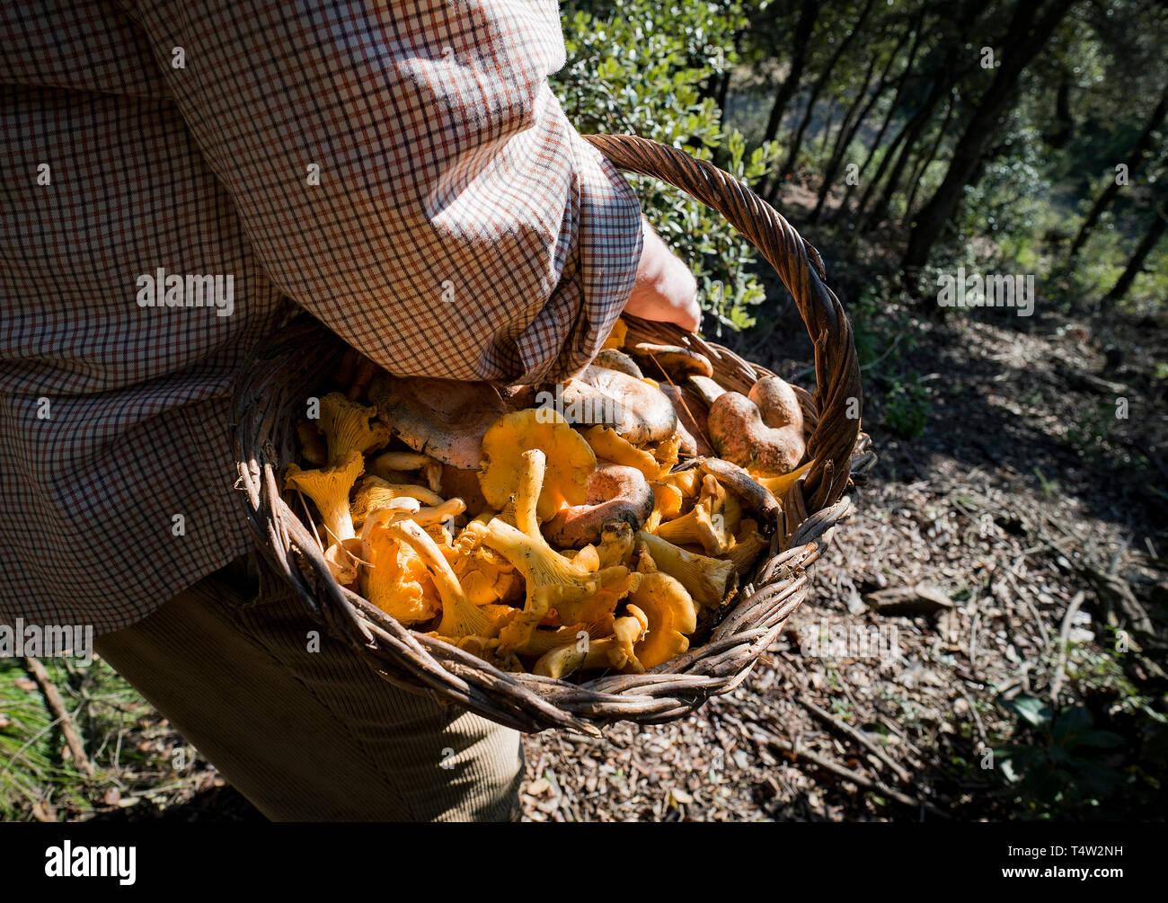 Bolataire, cueilleurs de champignons, Pineda de Mar. Catalunya. Spai Photo Stock