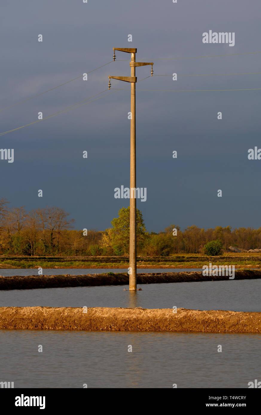 Pôle électricité immergé dans l'eau d'un champ de riz Photo Stock