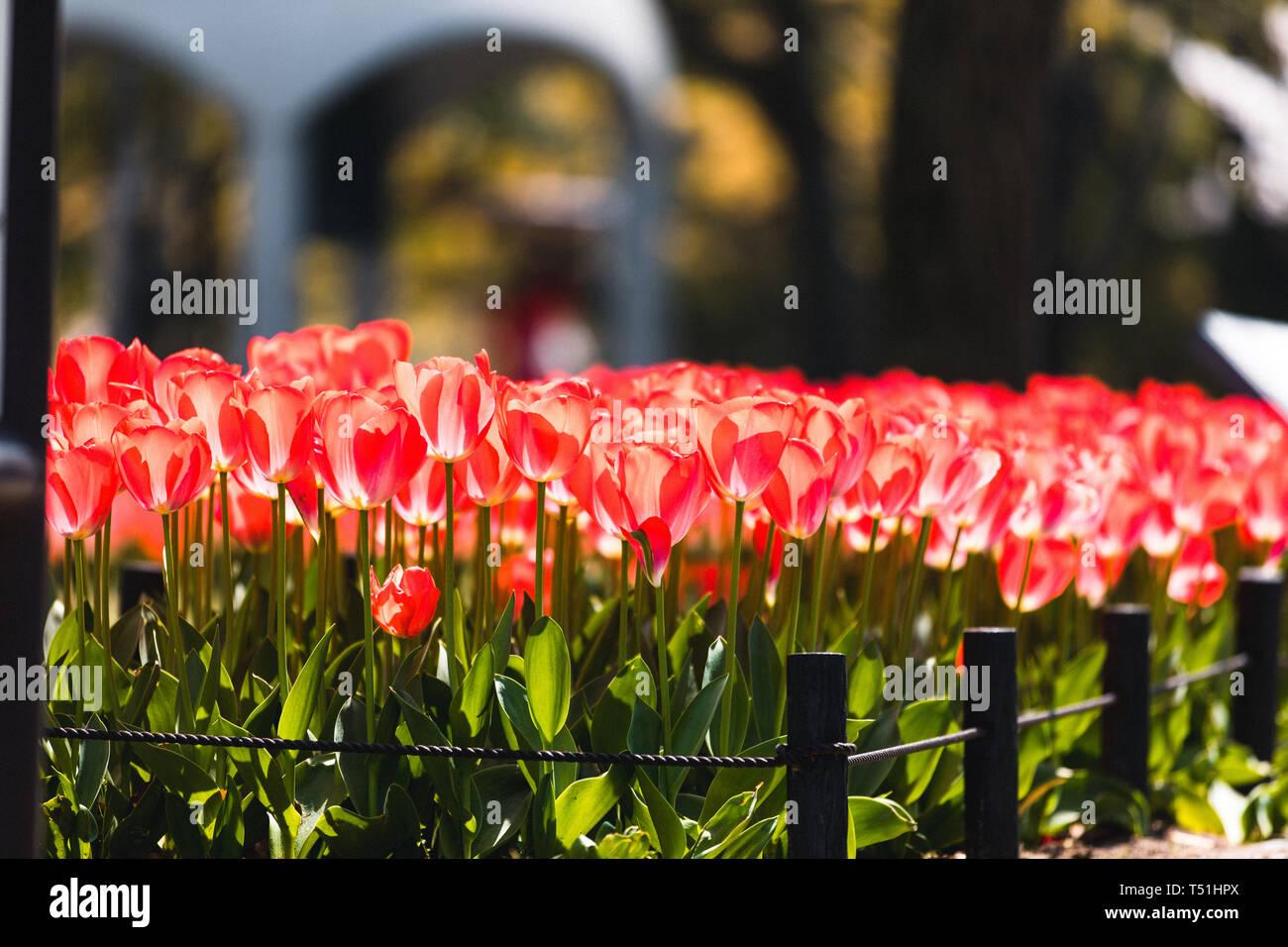 Des fleurs au centre mémorial de la paix à Hiroshima, Japon Banque D'Images