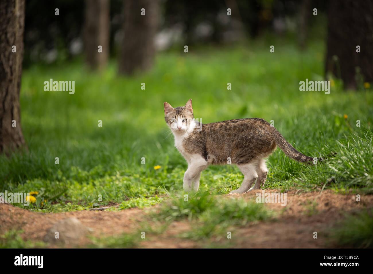 Curieux et mignon petit chat repéré en extérieur dans le parc. Belle expression interne avec les mammifères marins. Photo Stock