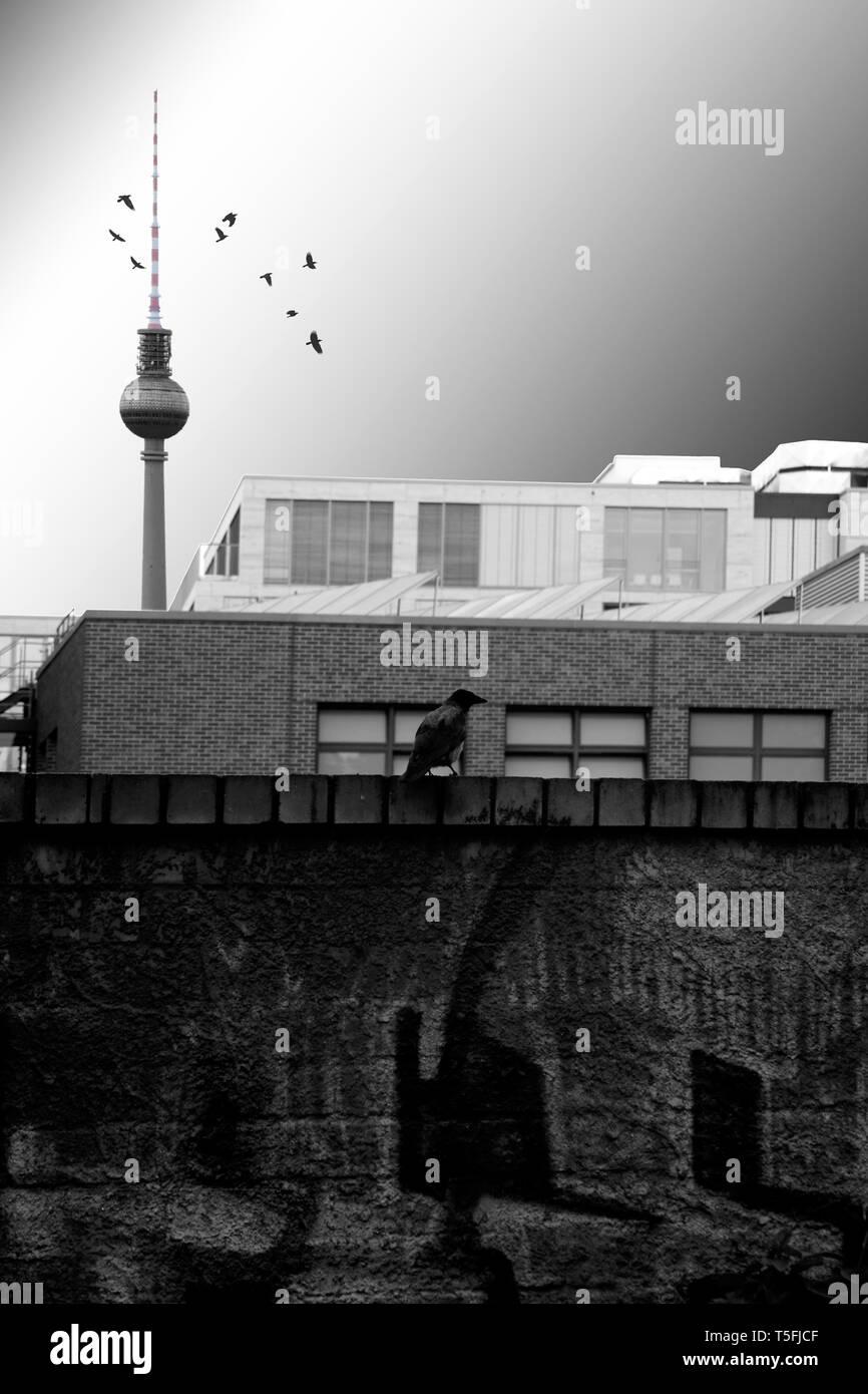Un corbeau debout sur un fond sombre et de graffitis avant une série de bâtiments commerciaux rectangulaire et la tour de télévision. Banque D'Images