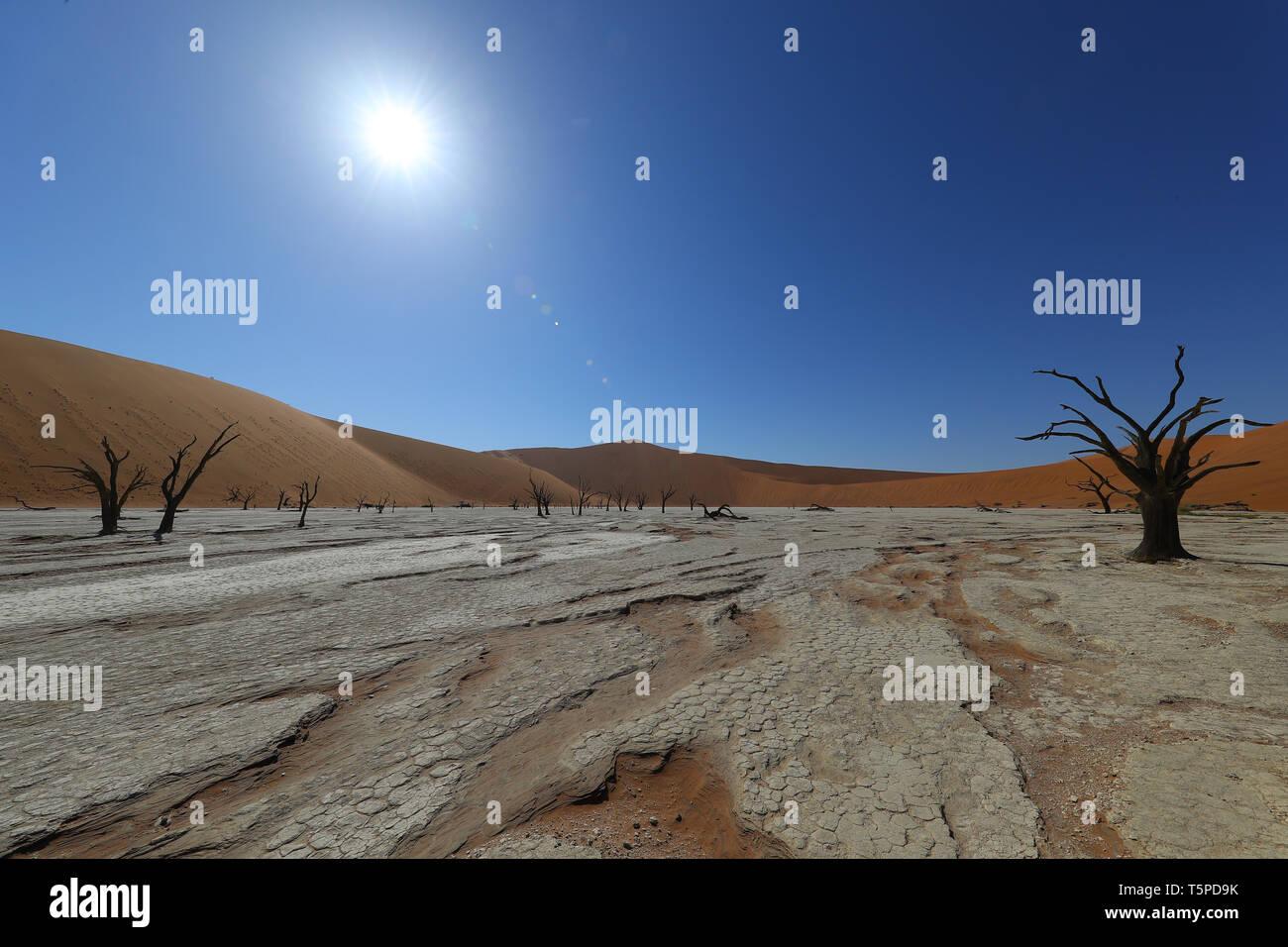 Deadvlei est une poêle à sel et à argile entourée de hautes dunes rouges, située dans la partie sud du désert du Namib. Banque D'Images