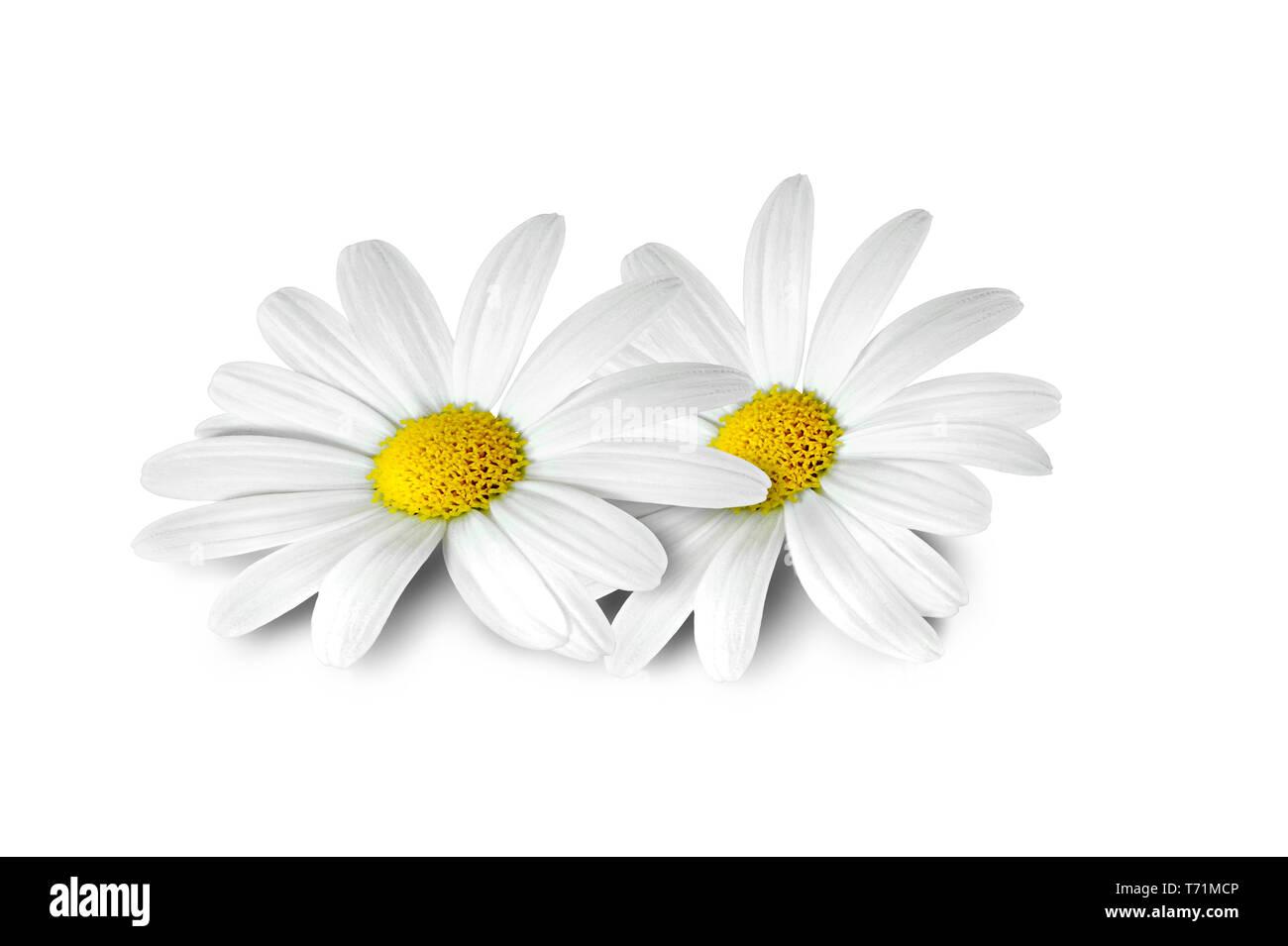 131 fleurs Photo Stock