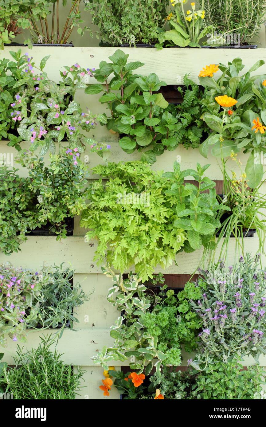 Petit Jardin Idee Jardin Vertical Fait De Upcycled Palette