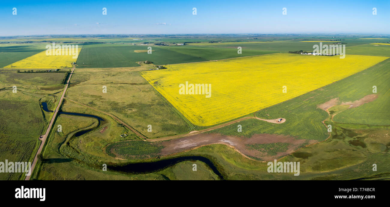 Vue aérienne de quelques champs de colza en fleurs entouré de champs de céréales et un windy Creek dans le premier plan avec ciel bleu Banque D'Images