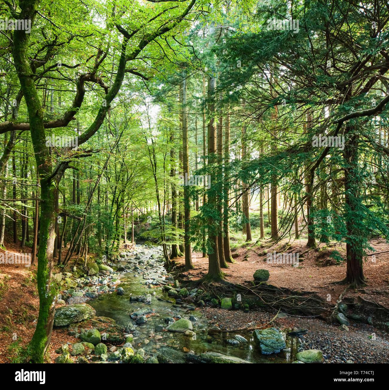 Tollymore Forest; Newcastle, comté de Down, Irlande Banque D'Images