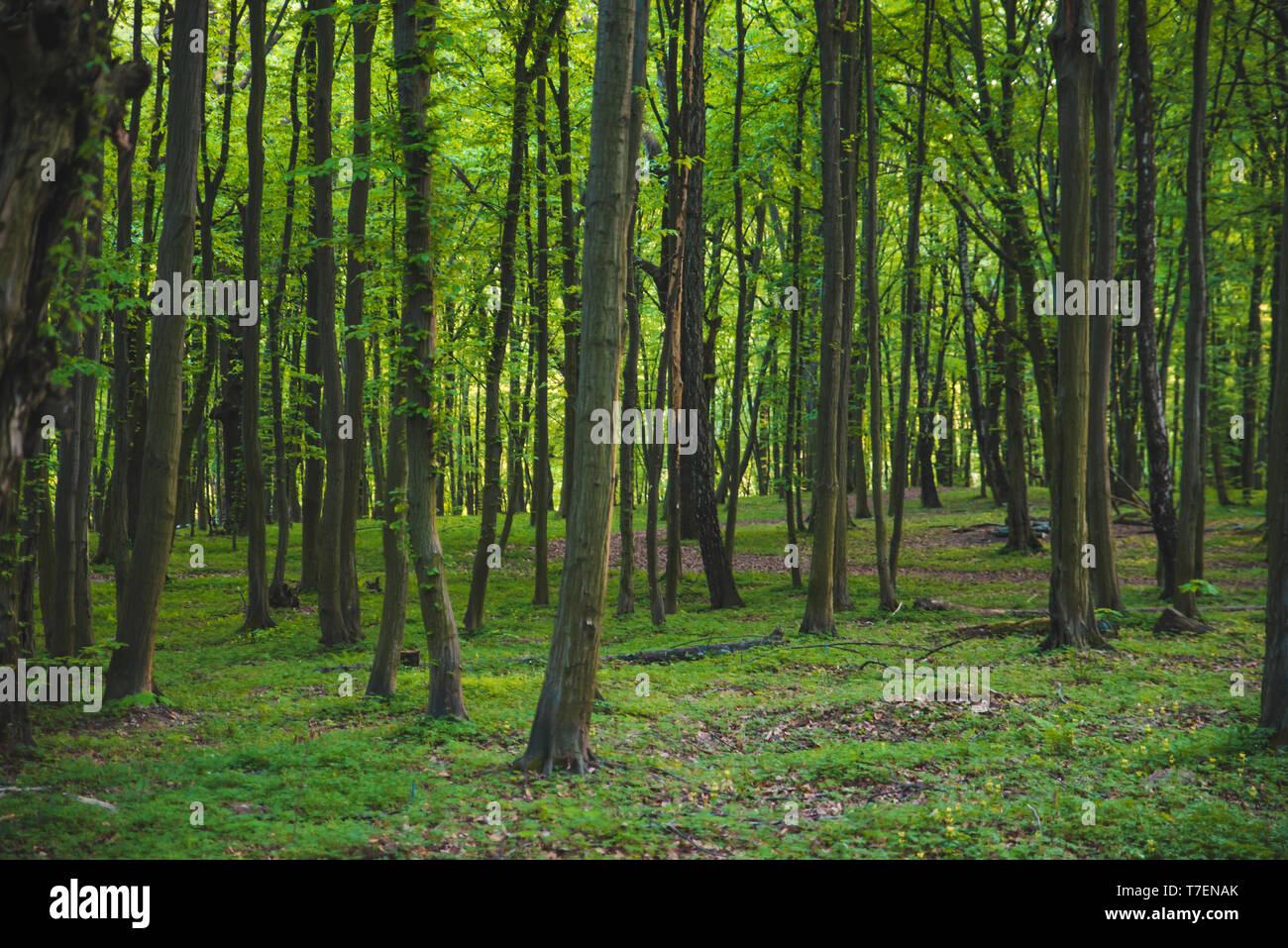 Vue sur forêt verte sans que personne. Le calme place Photo Stock