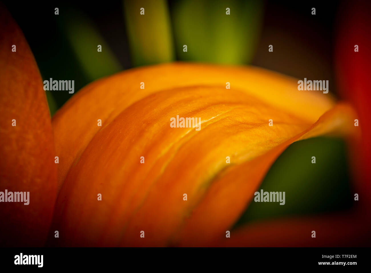Vue artistique de Lilly Fleurs Photo Stock