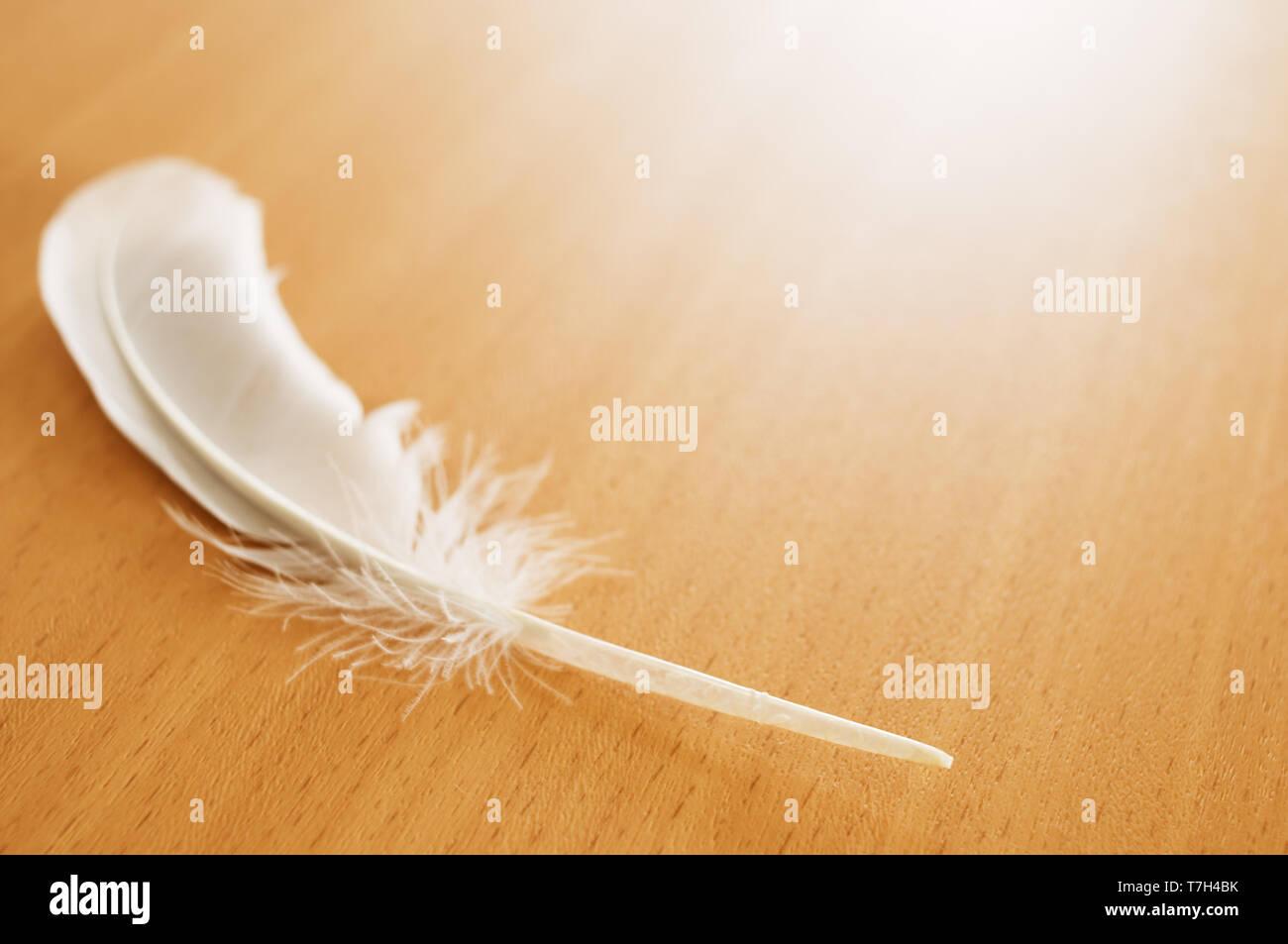 Plume d'oiseau blanc sur la table en bois. Photo Stock