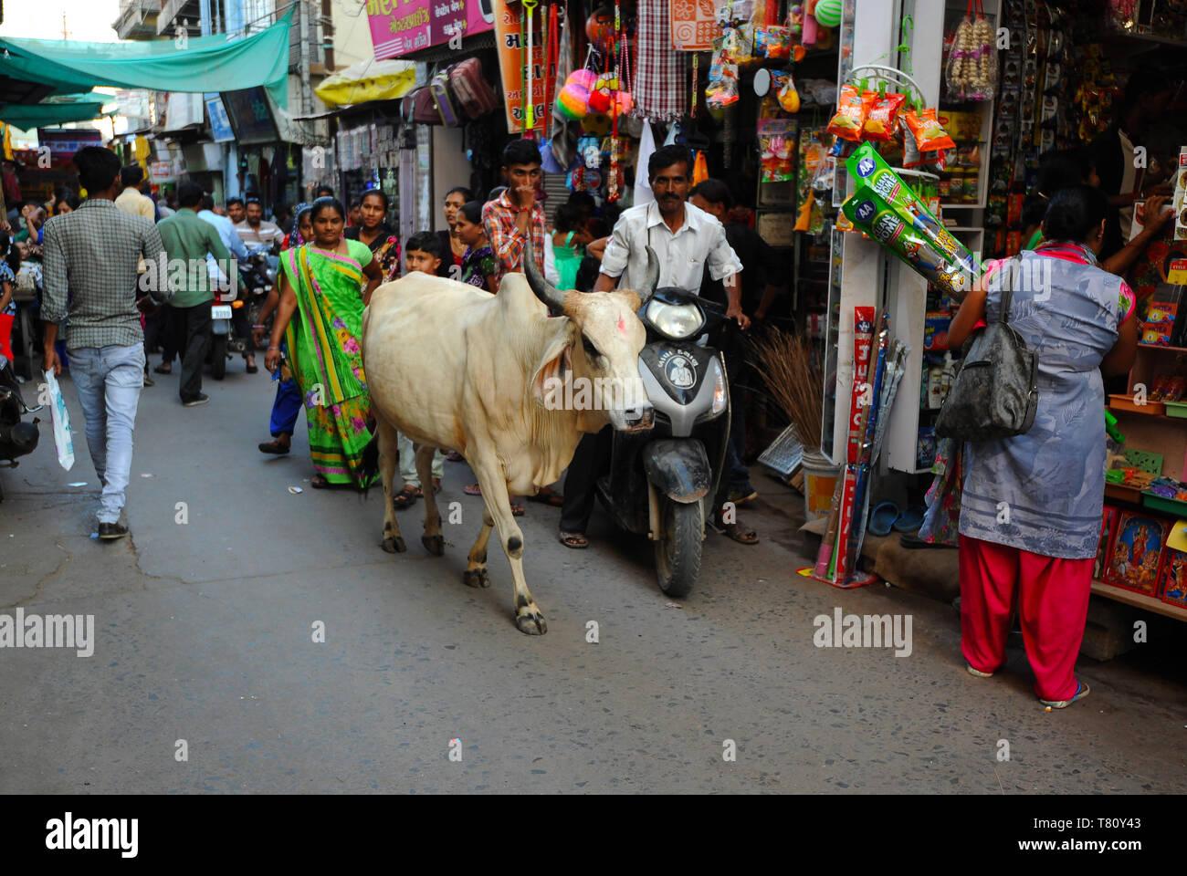 Rue commerçante animée sur le marché, avec des vaches sacrées, Mandvi, Gujarat, Inde, Asie Banque D'Images