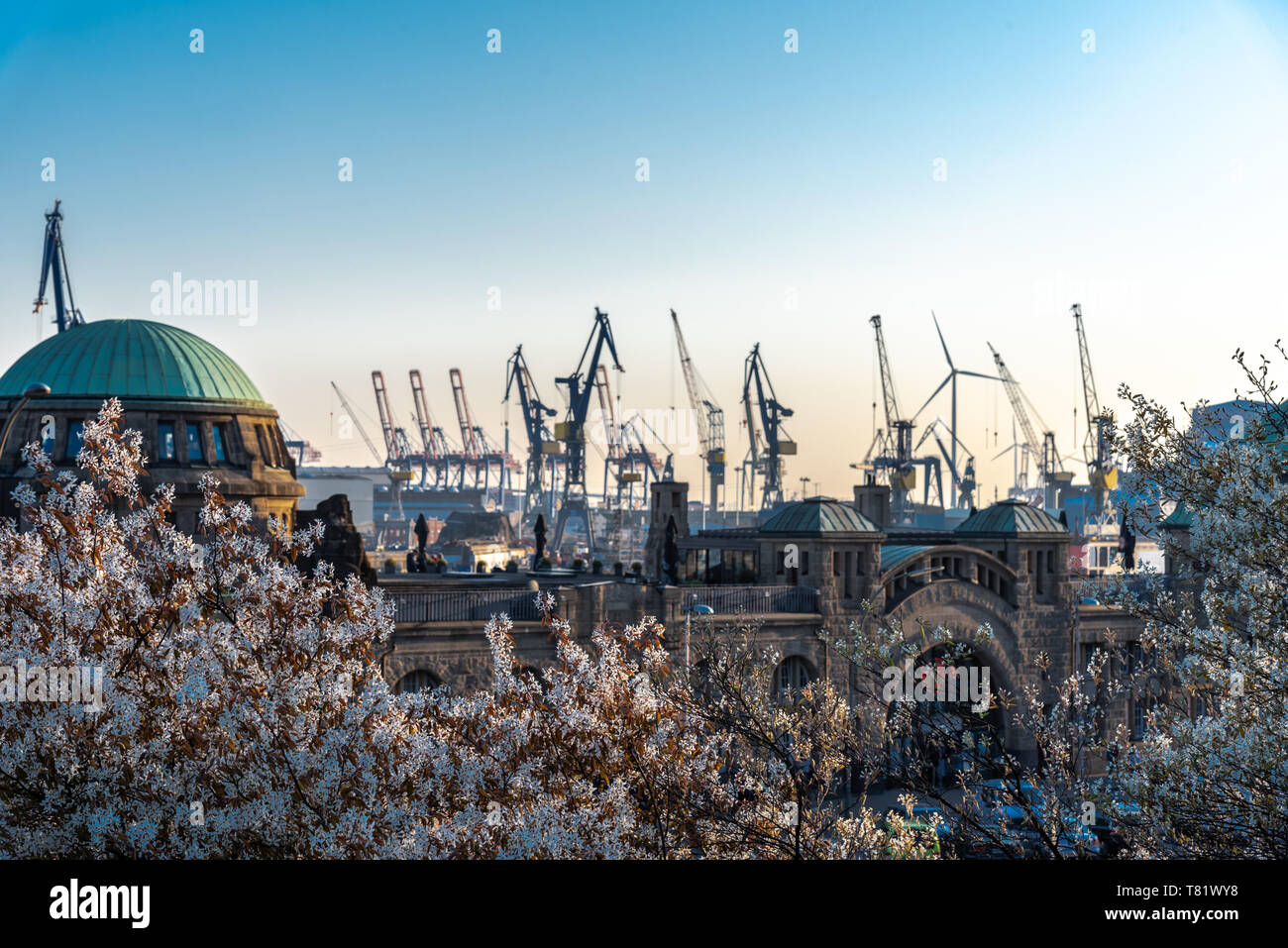 Arbres en fleurs à Hambourg (Allemagne) avec les administrations portuaires Grues dans l'arrière-plan Banque D'Images