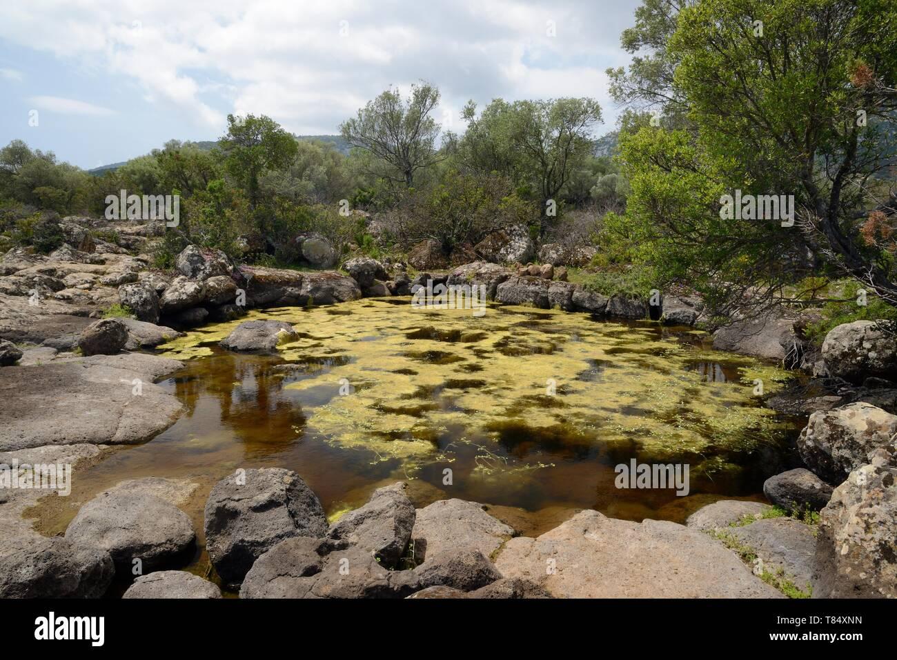 Comme l'eau de pluie sur la piscine naturelle Piscinas calcaire Plateau Golgo, parc national du Gennargentu, Baunei, Sardaigne, Italie, mai 2018. Photo Stock