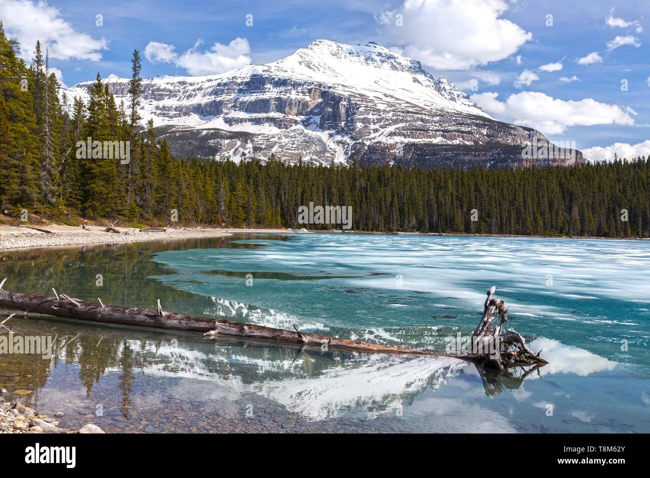 Beau paysage du lac bleu glacier dans le parc national de Banff avec Snowcapped Mountain Peak Sarbach reflète dans la surface de l'eau était au printemps Banque D'Images