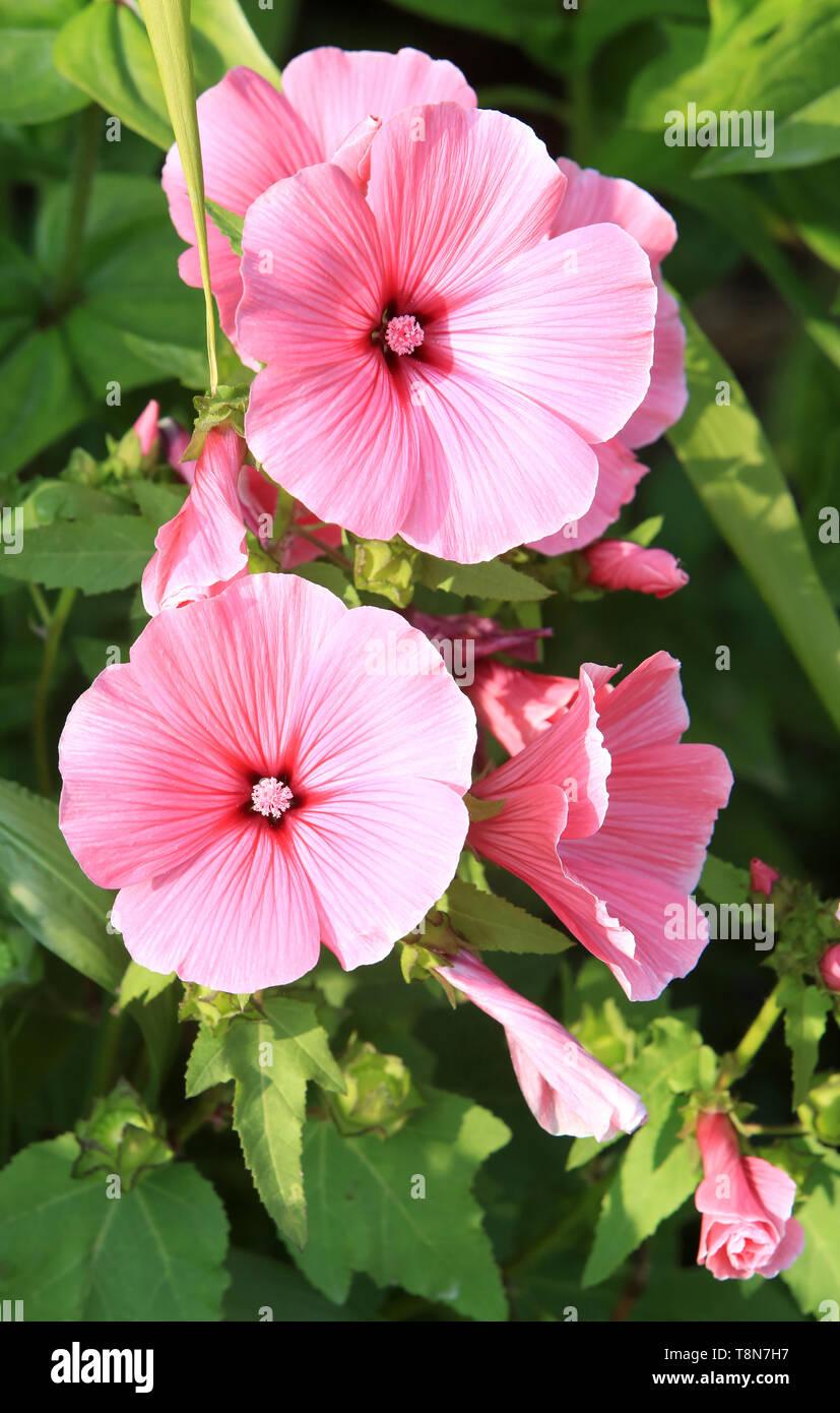 Fleurs. Photo Stock