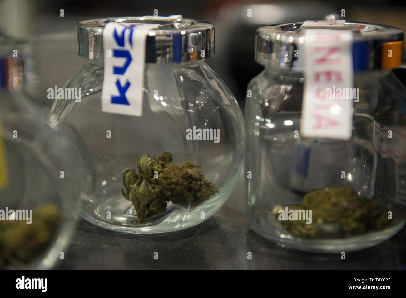 13 mai 2019 - Turin, Piémont, Italie - Turin, Italy-May 13, 2019: le cannabis légal en vente dans un magasin de tabac. La marijuana est une substance psychoactive qui est obtenu à partir d'inflorescences séchées de plantes de chanvre femelle. Le Delta-9-tétrahydrocannabinol, appelée le THC est contenue dans toutes les variétés de chanvre, une substance qui rend la plante illégale dans de nombreux pays. Il y a des variétés qui peuvent être cultivées légalement pour lequel la limite à ce contenu est fixé par la loi. En Italie, la vente de cannabis légal a été légalisée, mais ces derniers jours, Matteo Salvini le Ministre italien de l'Intérieur veut faire Banque D'Images