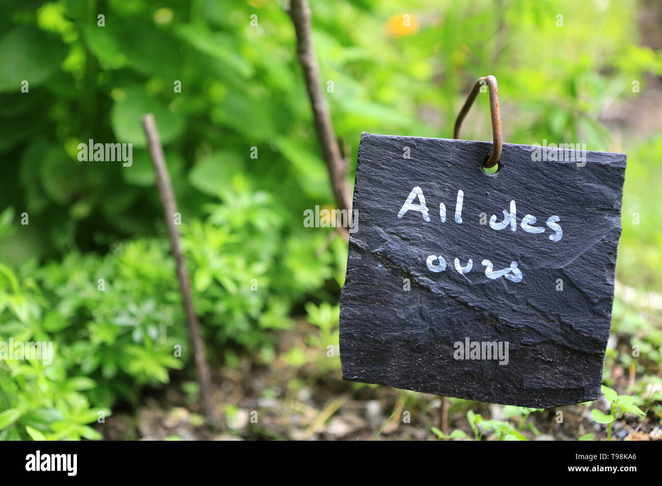 Ail des ours. Photo Stock
