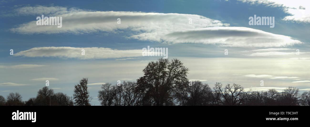 Lenticulaire rares stratocumulus crossing ciel d'hiver avec des arbres silhouetté contre elle Photo Stock
