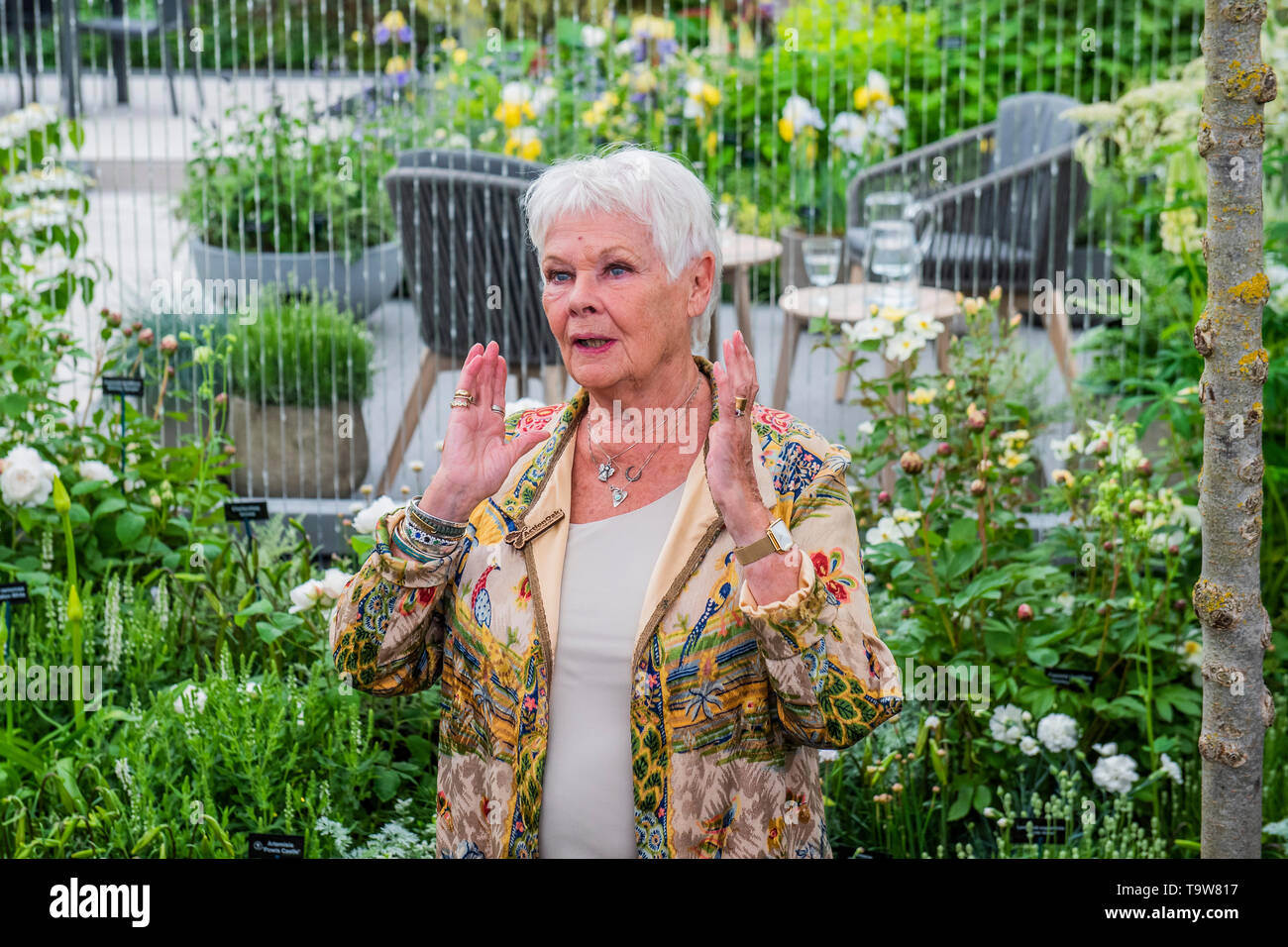 Londres, Royaume-Uni. 20 mai, 2019. Dame Judi Dench lance une nouvelle initiative elming sur le stand des pépinières Hillier - Appuyez sur preview journée à la RHS Chelsea Flower Show. Crédit: Guy Bell/Alamy Live News Banque D'Images