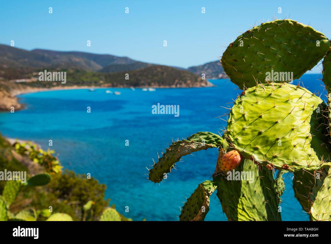 Une vue panoramique sur la Spiaggia di Mari Pintau et sur la mer Méditerranée en Sardaigne, Italie, avec un cactus dans l'avant-plan Photo Stock