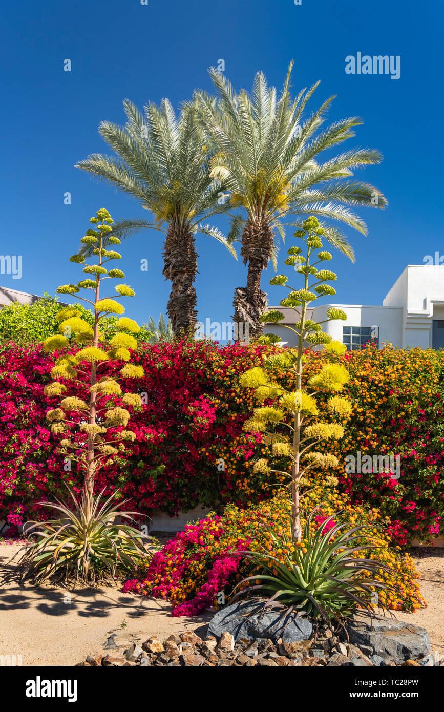 Paysagement résidentiel sur Ramon Road, Palm Springs, Californie, USA. Photo Stock