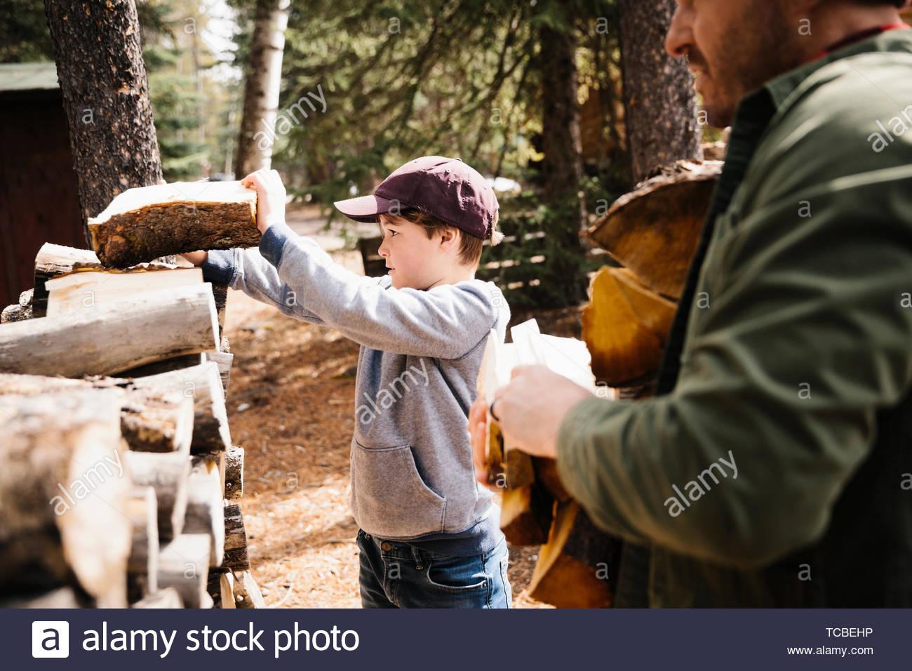 Père et fils, ramasser du bois de chauffage Photo Stock