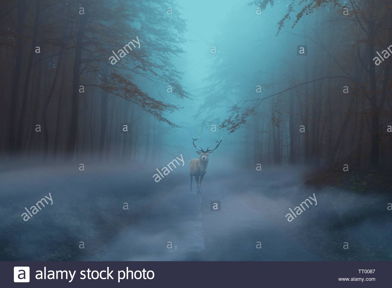 Beauté naturelle forêt de fantaisie deer. Photo Stock