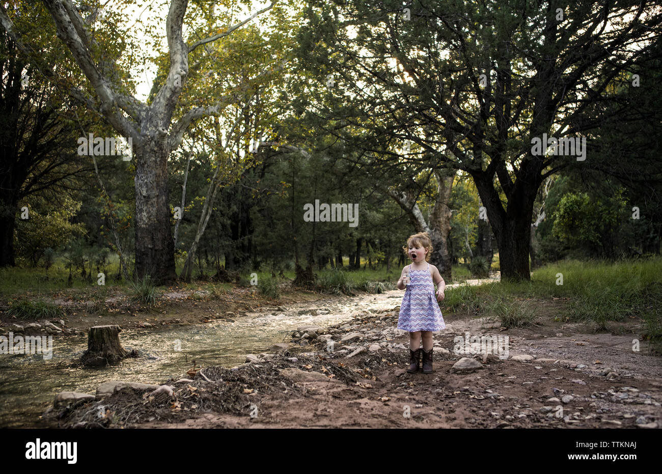 Curieux Girl standing by stream contre des arbres à forest Photo Stock