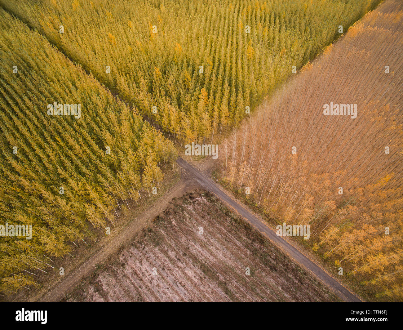 High angle view of tree farms Photo Stock